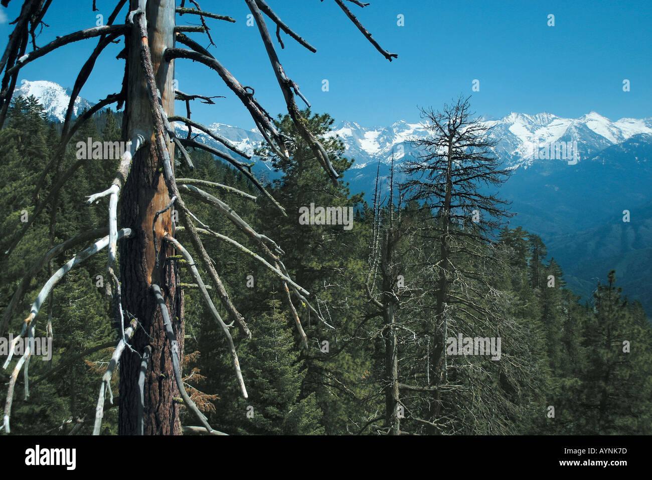Waldige Berge und schneebedeckte Gipfel Californien USA - Stock Image