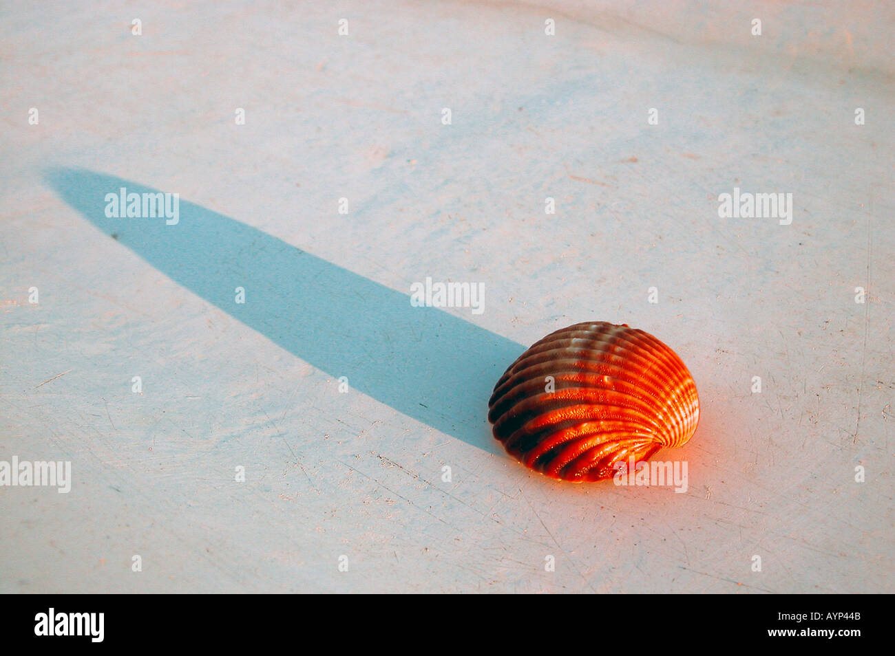 red shell on a white rowing boat - Stock Image