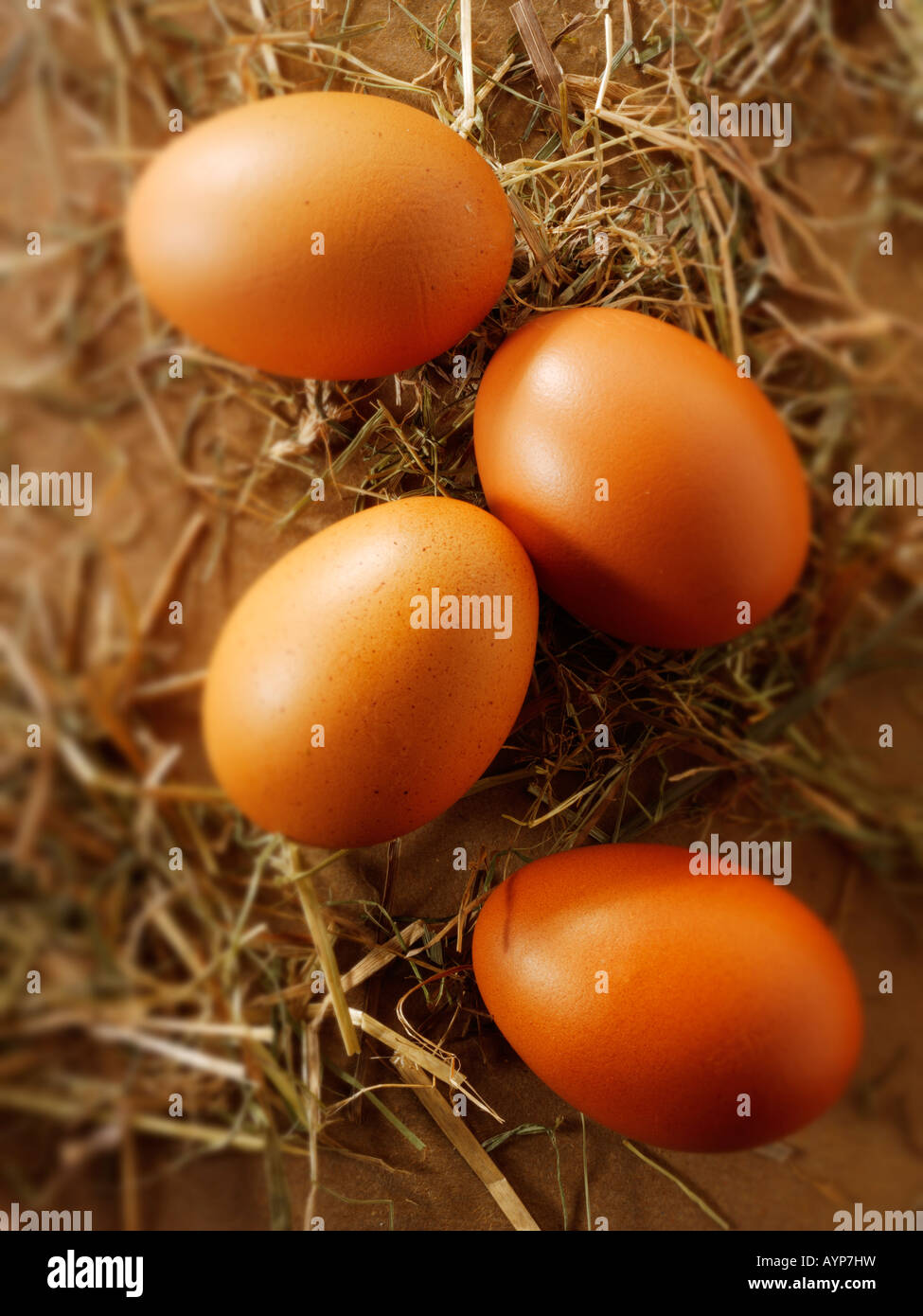 Burford Brown organic free range chicken eggs - Stock Image