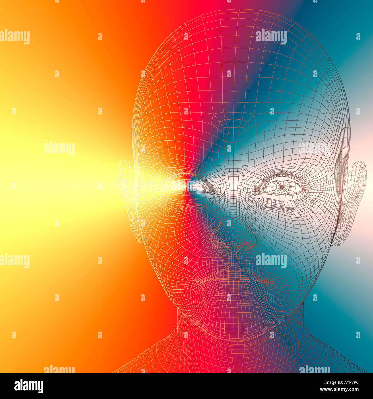 Computer Generated Wire Frame View Stock Photos Ayp Wiring Diagram 3d Of Face Young Man Image