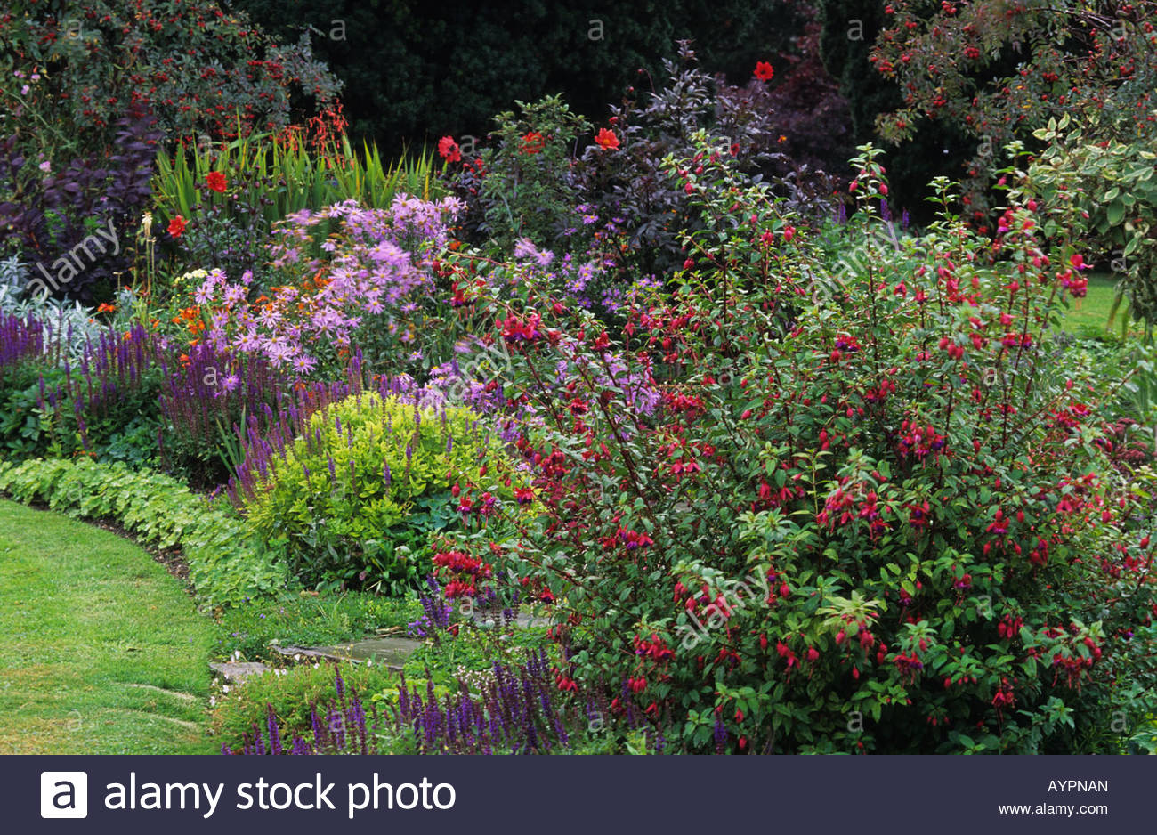 Merveilleux Private Garden Sussex Mixed Late Summer Border With Hardy Fuchsias Asters  Sedums Etc Mixed Late Summer Border September