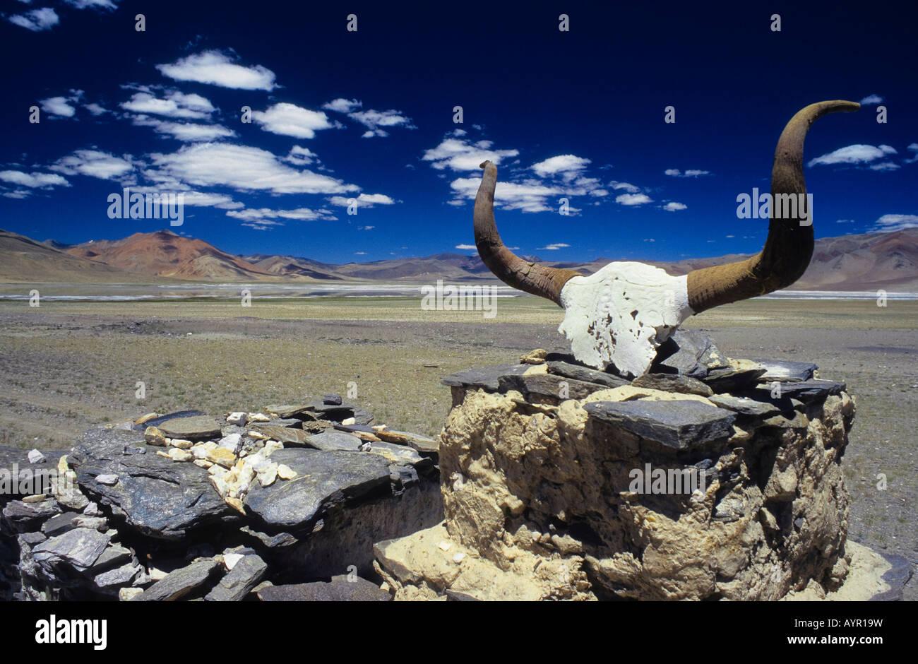 Mani inscriptions on a yak skull, Himalayas, Ladakh, India - Stock Image