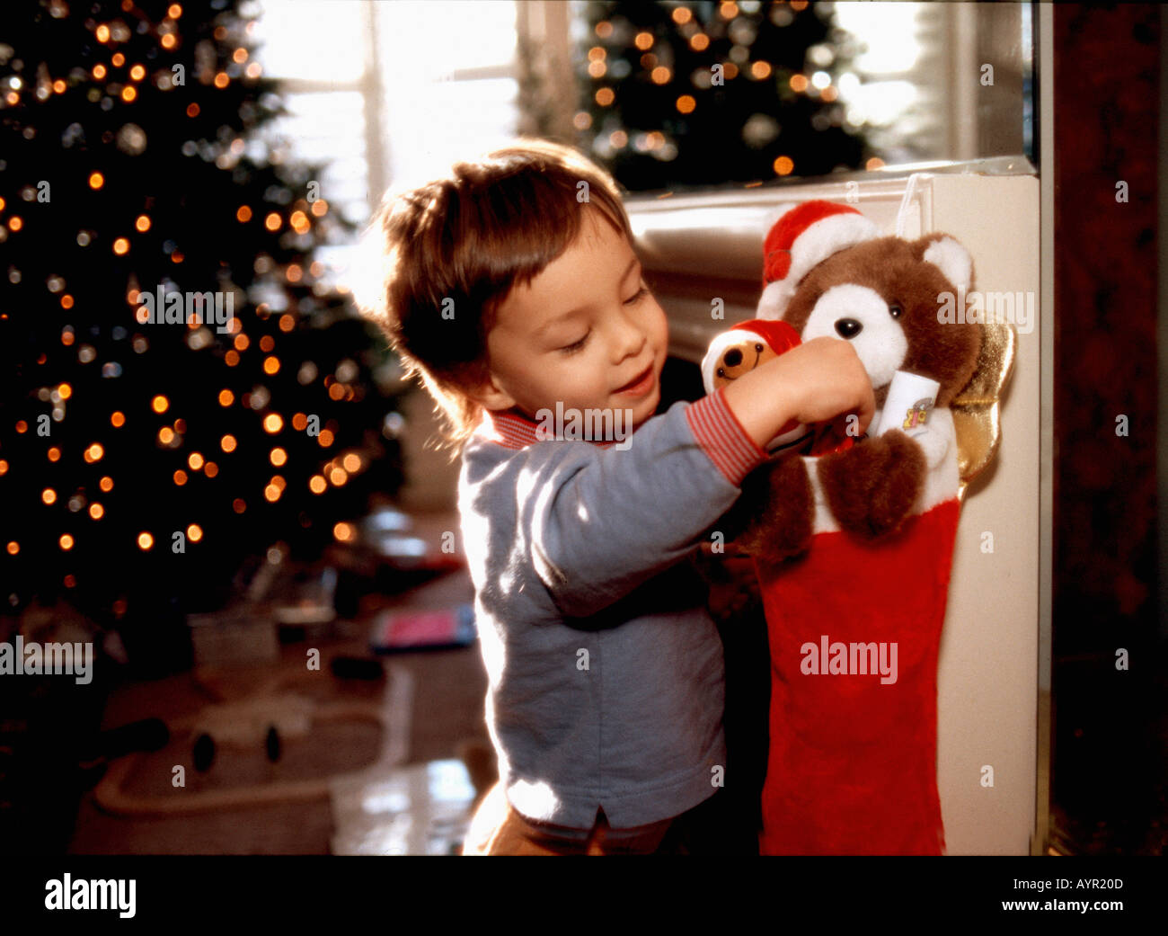 3 Year Old Boy Opening Christmas Stocking On Morning With Tree In Back Ground