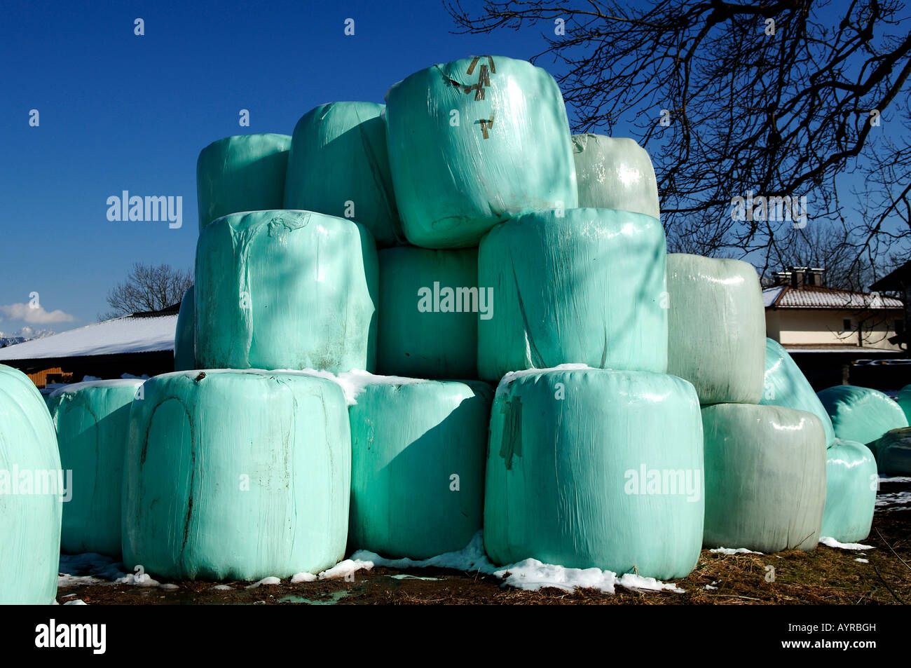 Wrapped silage bales, winter feed for cows, Going, Tirol, Austria, Europe - Stock Image