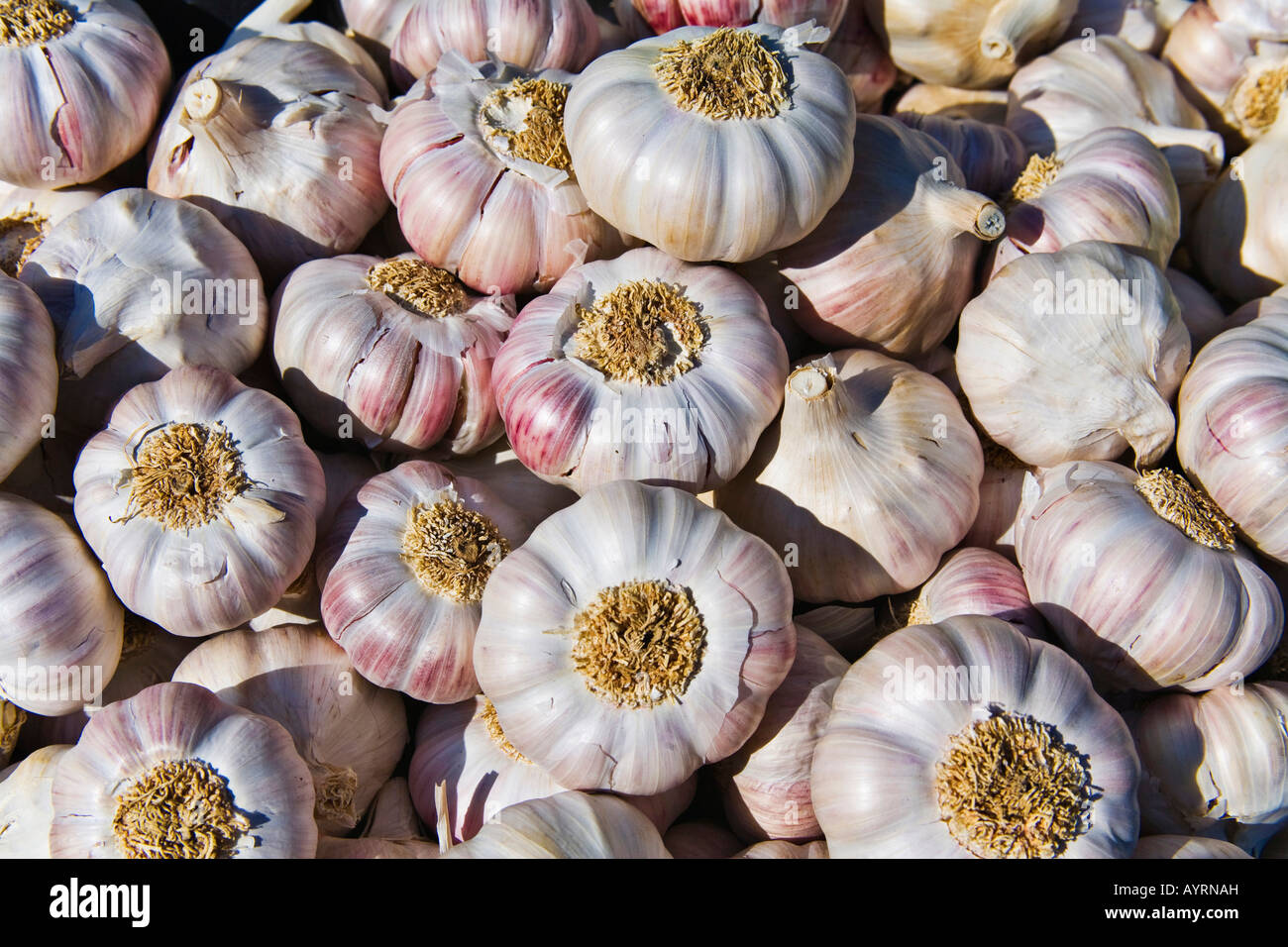 Garlic (Allium sativum) Stock Photo