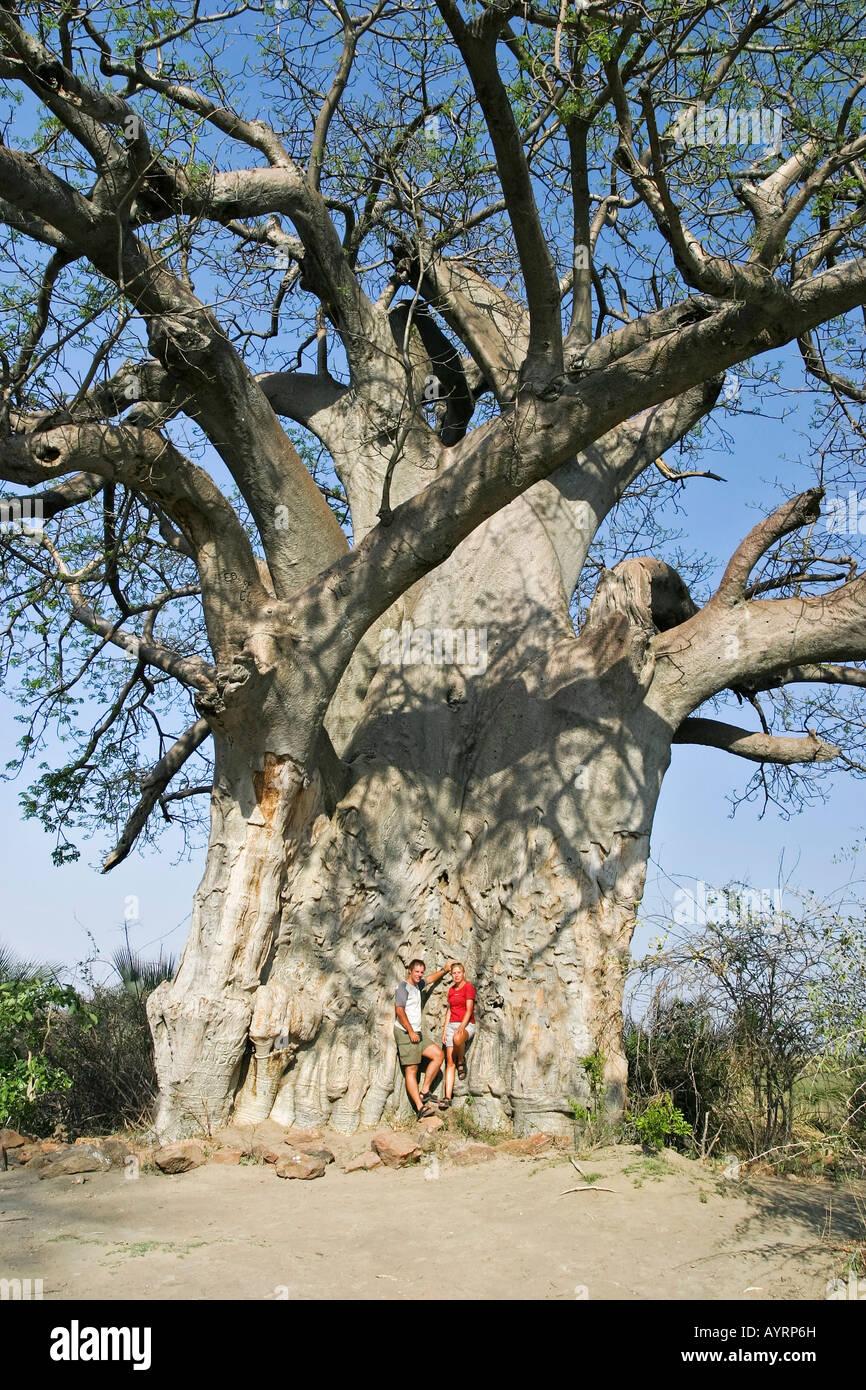 Baobab (Adansonia digitata), Mahango Game Reserve, Caprivi Strip, Namibia, Africa - Stock Image
