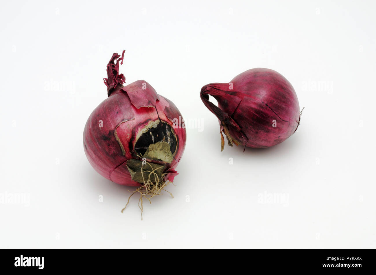 Red onions - Stock Image
