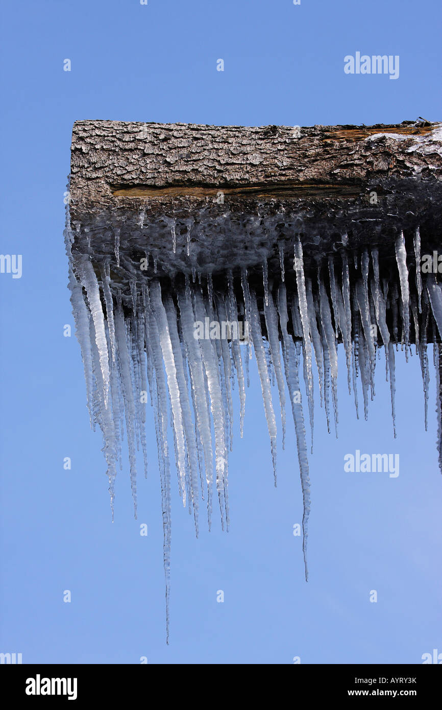 Icicles hanging from a wooden log Stock Photo