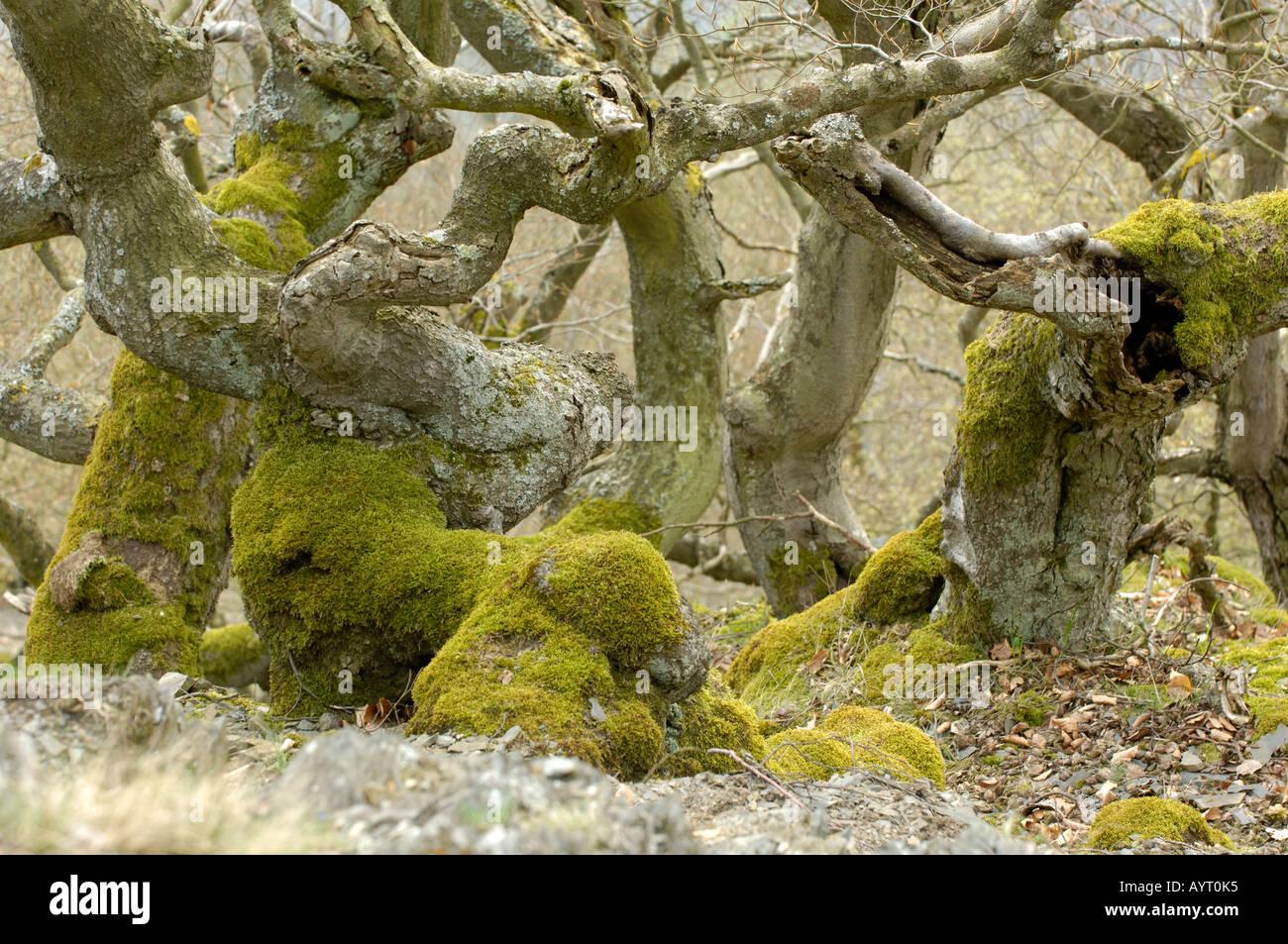 Nationalpark Kellerwald Edersee Germany - Stock Image