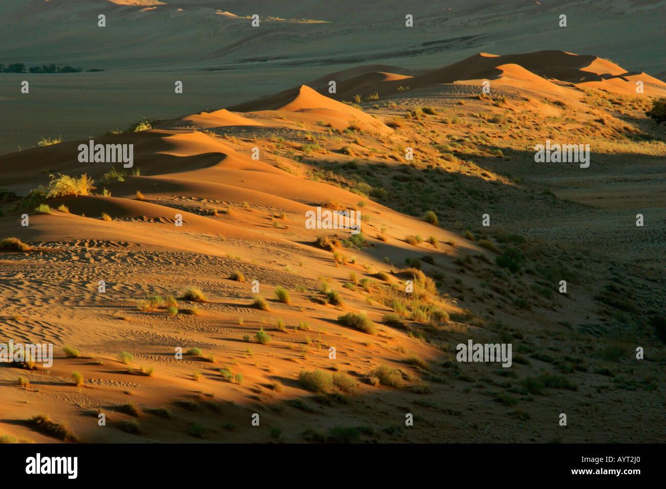 view from Elim dune to the dune Namib Namib desert Namib Naukluft Park Namibia Africa Stock Photo