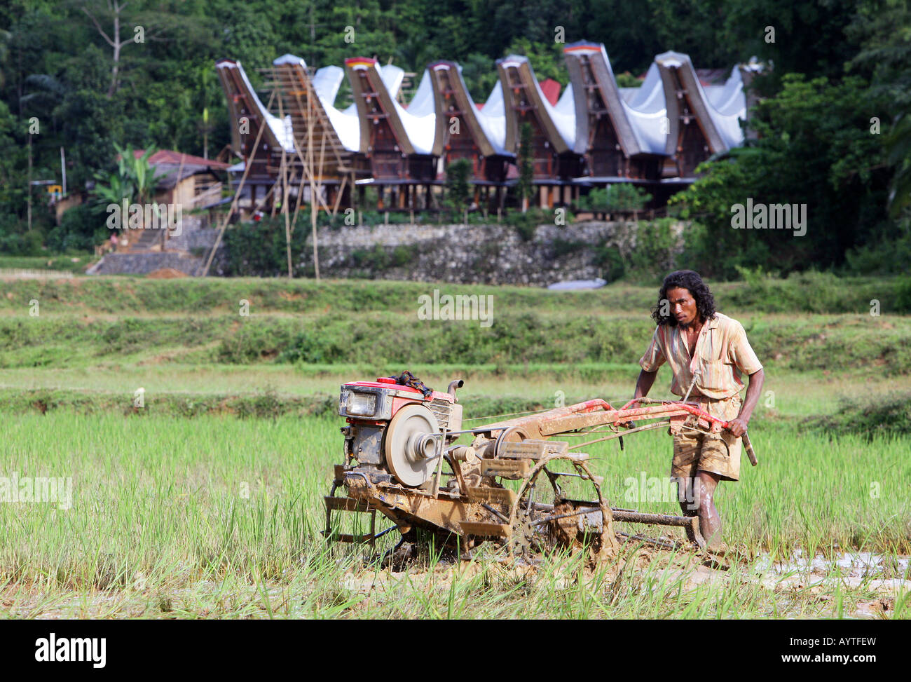 Indonesia, man plowing rice field with a tractor, Sulawesi Island near Rantepao - Stock Image