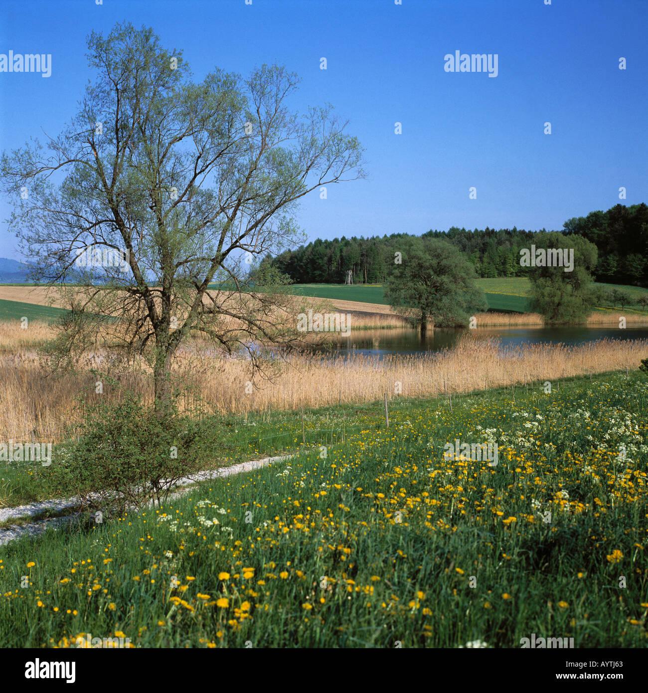 Wiesenlandschaft, huegelige Landschaft mit kleinem See, Killenweiher, Salem, Linzgau, Bodensee, Baden-Wuerttemberg - Stock Image