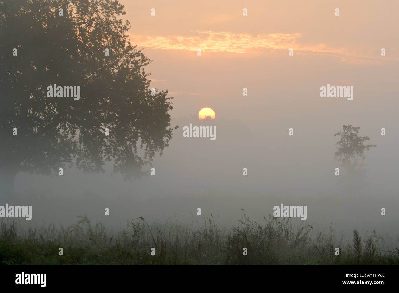 Sunrise at river Nuthe near Bergholz Rehbruecke, Nuthetal, district Potsdam Mittelmark, Brandenburg, Germany Stock Photo