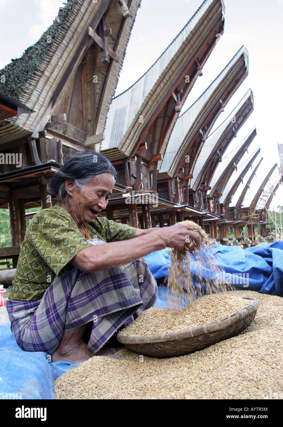 Indonesia: woman cleaning rice in front of Tongkonan houses (rice storage houses). Sulawesi Island near Rantepao - Stock Image
