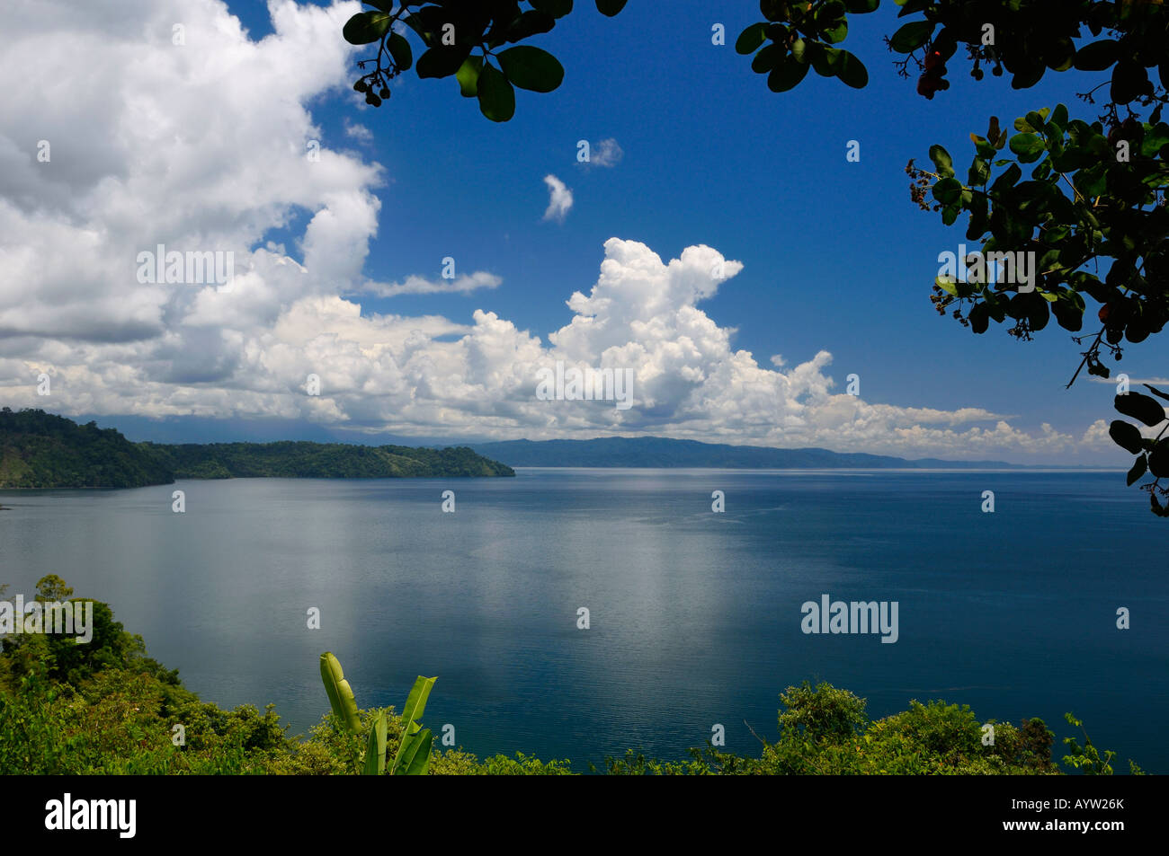 Blue calm water of isolated Golfo Dulce at Osa Peninsula Costa Rica under a Cashew tree - Stock Image