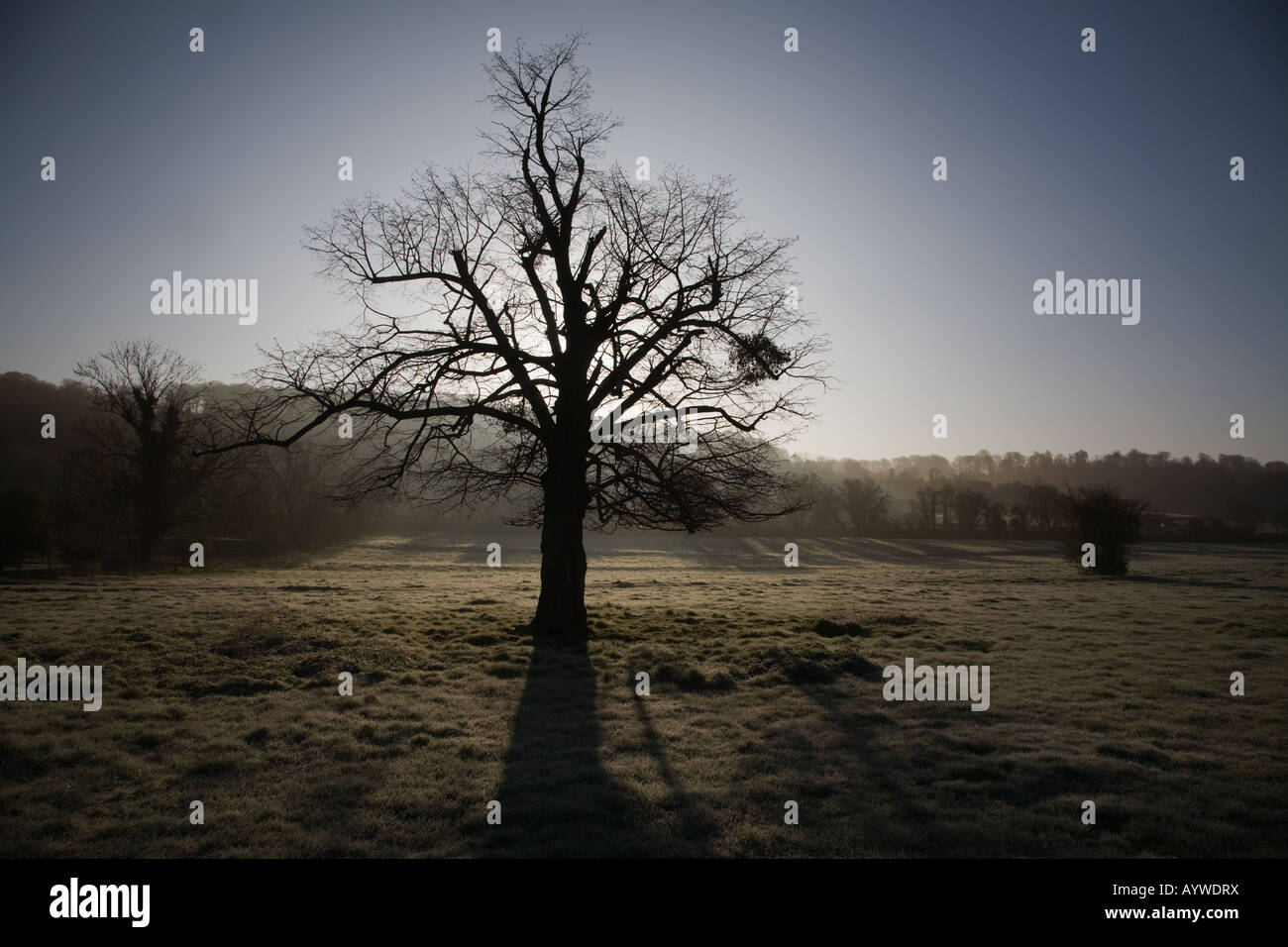 Tree silhouette in early morning sunshine breaking through atmospheric mist in late Winter weather - Stock Image