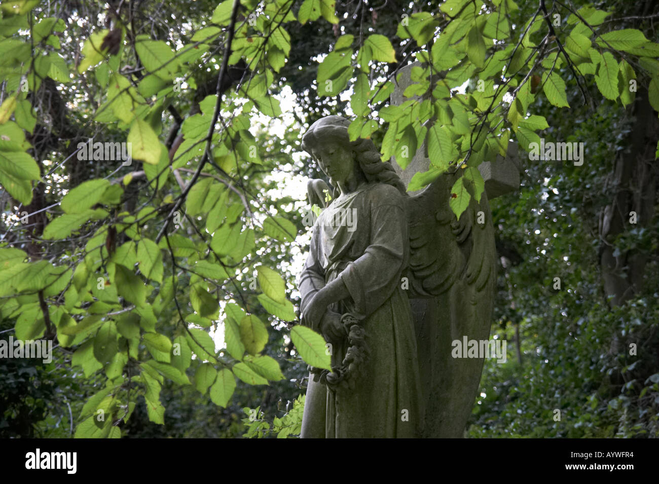 Angel statue in Highgate Cemetery in London England - Stock Image