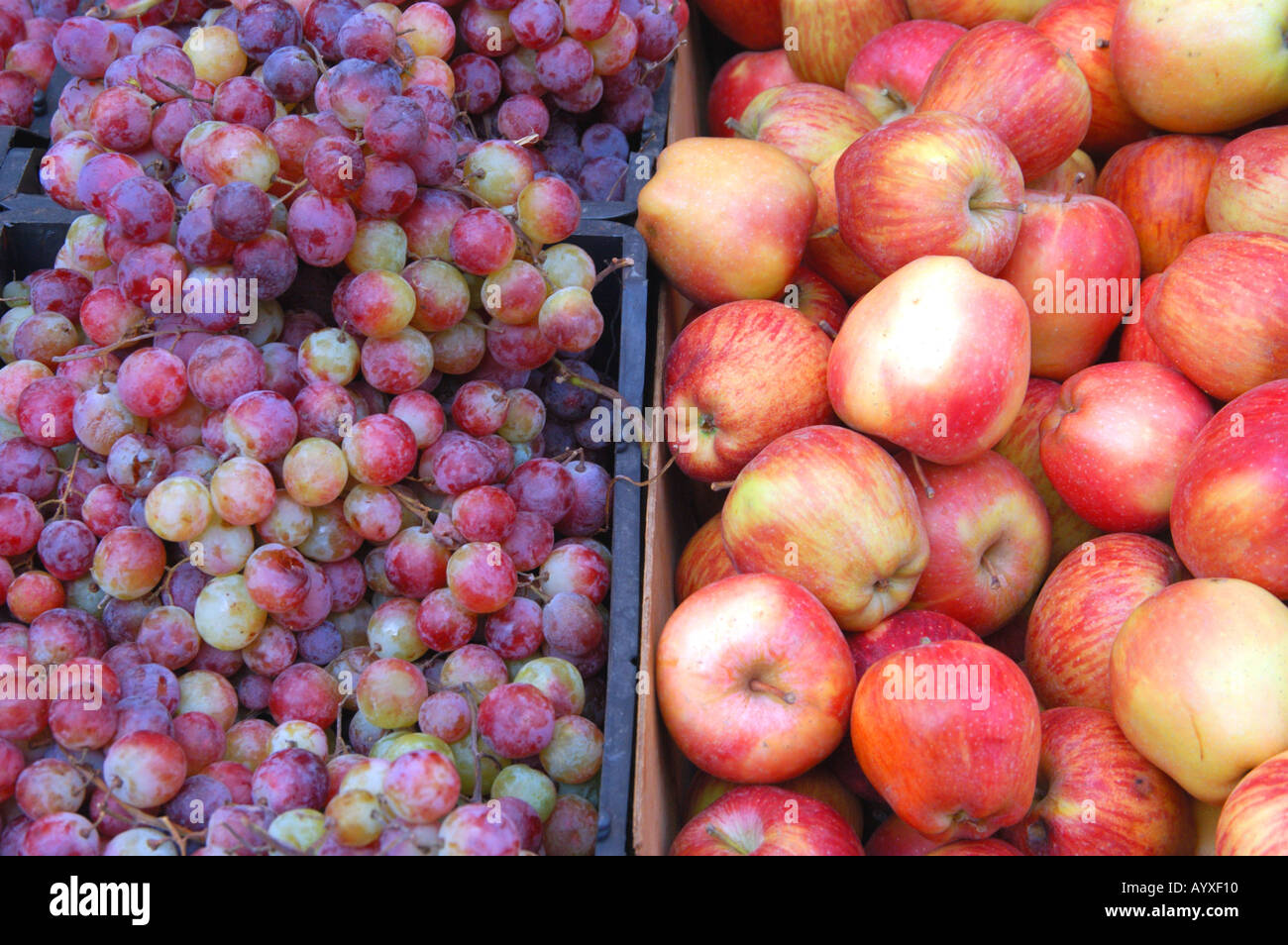 6b59312e079d1d Red Grapes and Apples in Fruit Market Amman Jordan Stock Photo ...