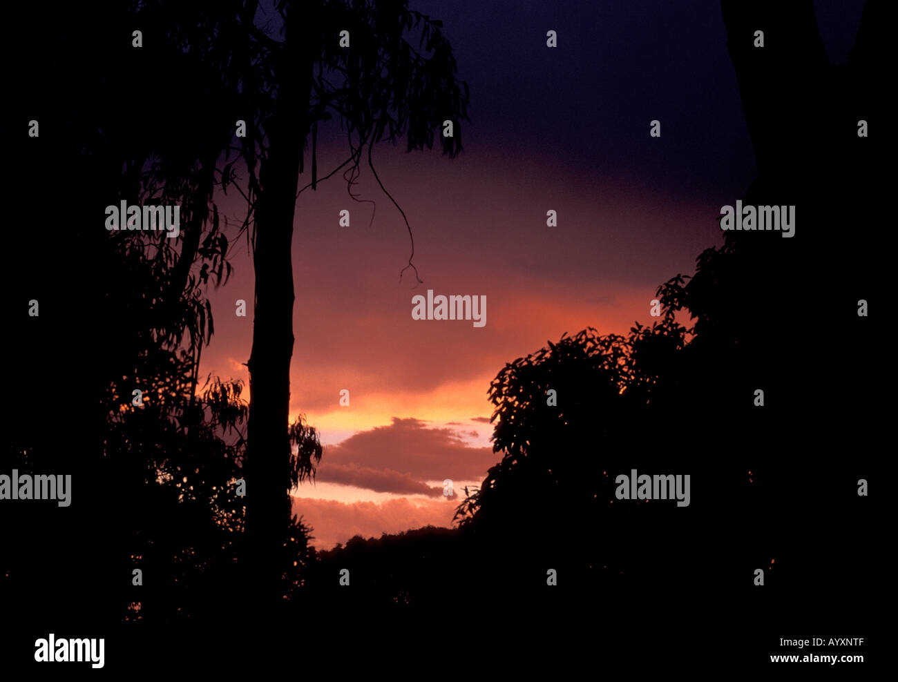 a9f5930715 Silhouetted trees against a fiery stormy orange sky in the Dandenong  National Park