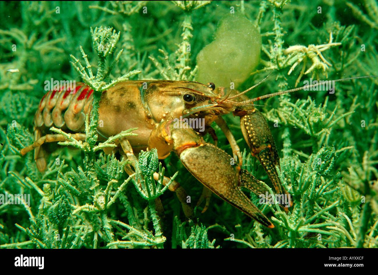 Horoscope for Crayfish 2018 52