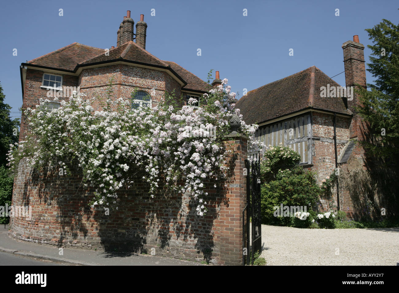 White roses on the wall of a large house in the chilterns village of Little Missenden Stock Photo