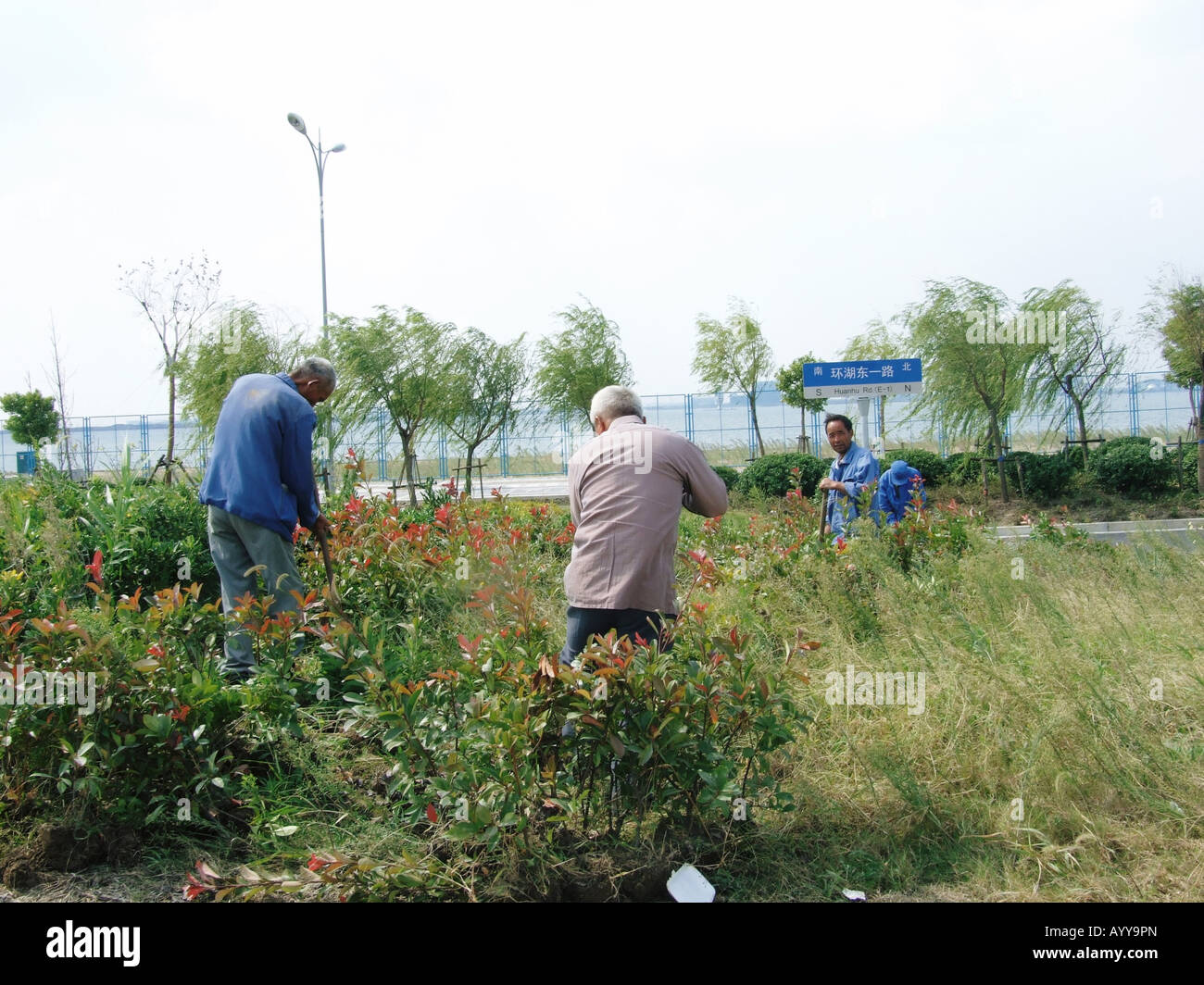 A group of gardeners in Lingang New Town near Shanghai China Stock Photo
