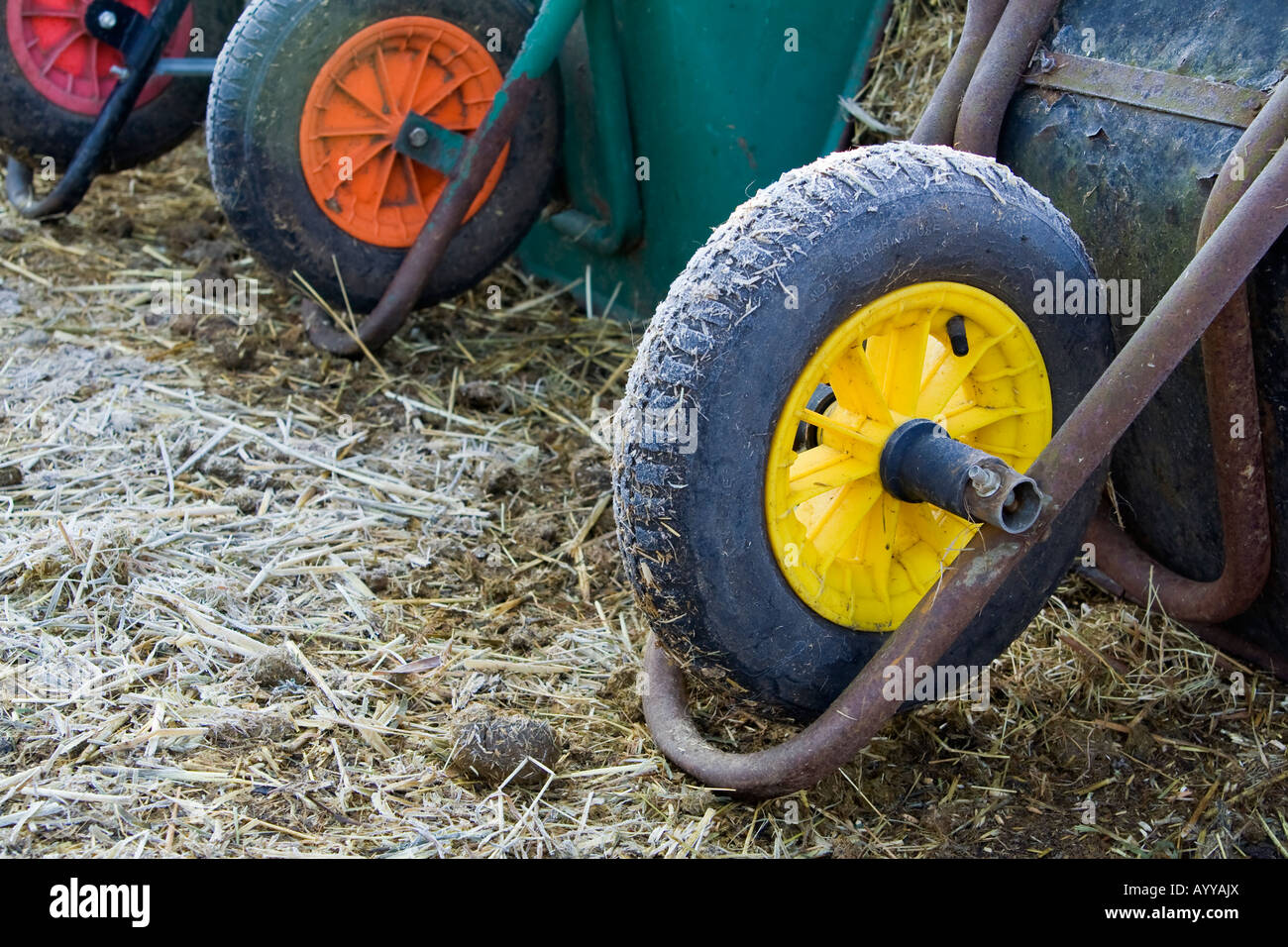 A line of wheelbarrows, UK. - Stock Image