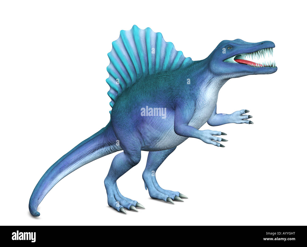 Spinosaurus created with 3D applications. Spinosaurus is one of the late cretaceous dinosaurs with a 'sail' - Stock Image