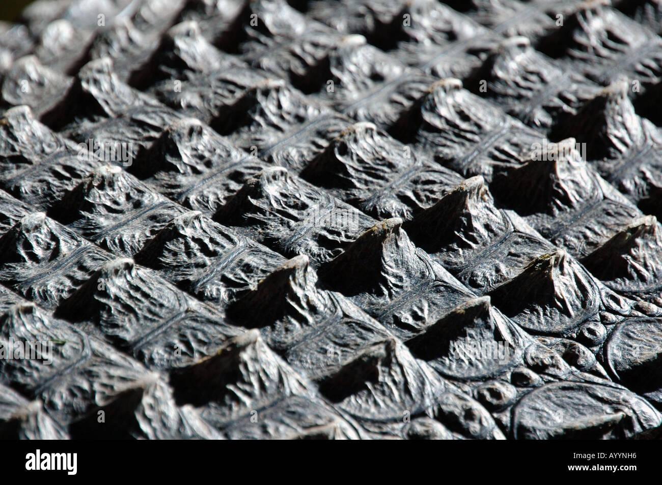 Croc textura - Stock Image