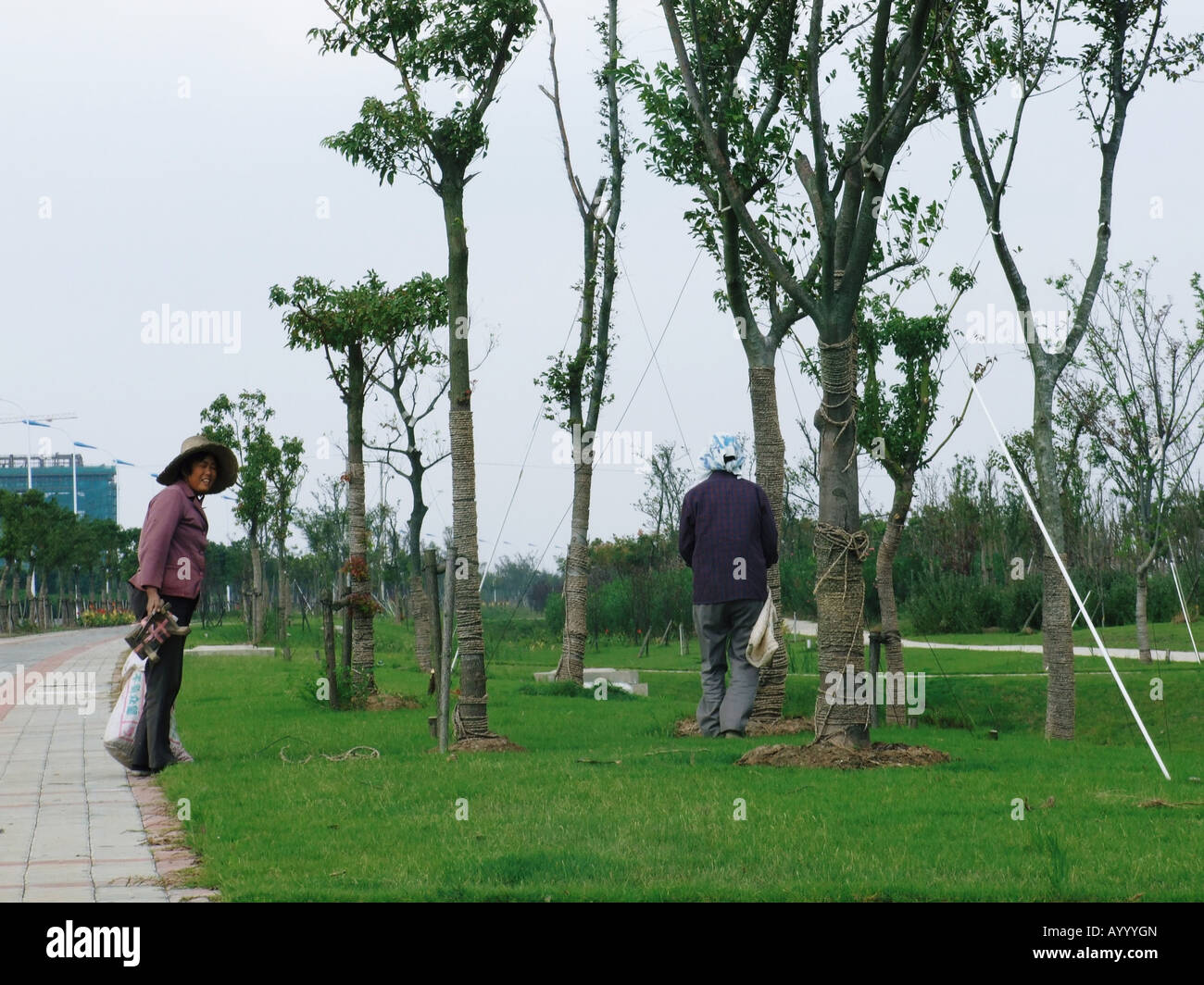 Gardeners between trees in Lingang New City near Shanghai China Stock Photo