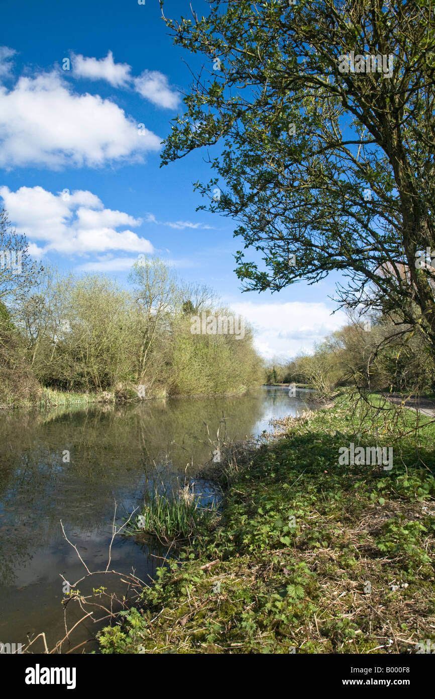 Picturesque Kennet and Avon canal between Sheffield and Garston locks Theale Reading Berkshire - Stock Image