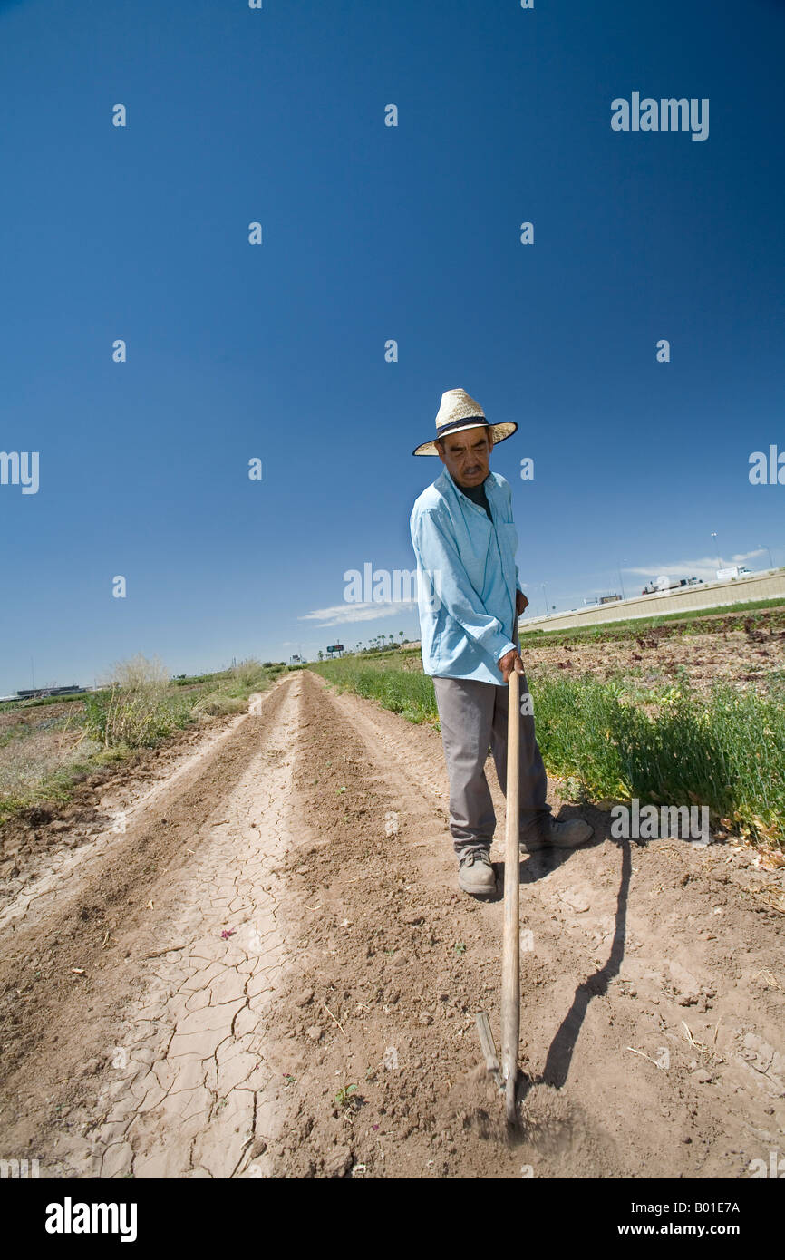 Community Supported Agriculture on Small Farm in Phoenix - Stock Image