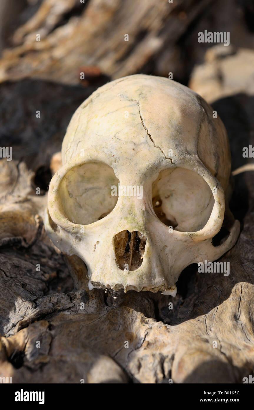 Sun Bleached Bone Stock Photos & Sun Bleached Bone Stock