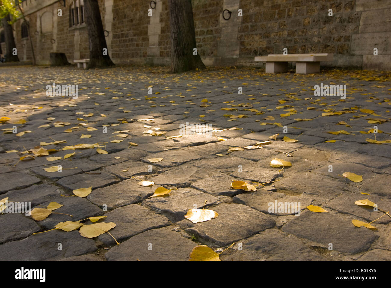 Fall leaves cover the cobblestone riverbank of Port de Montebello on the Left Bank in Paris France - Stock Image