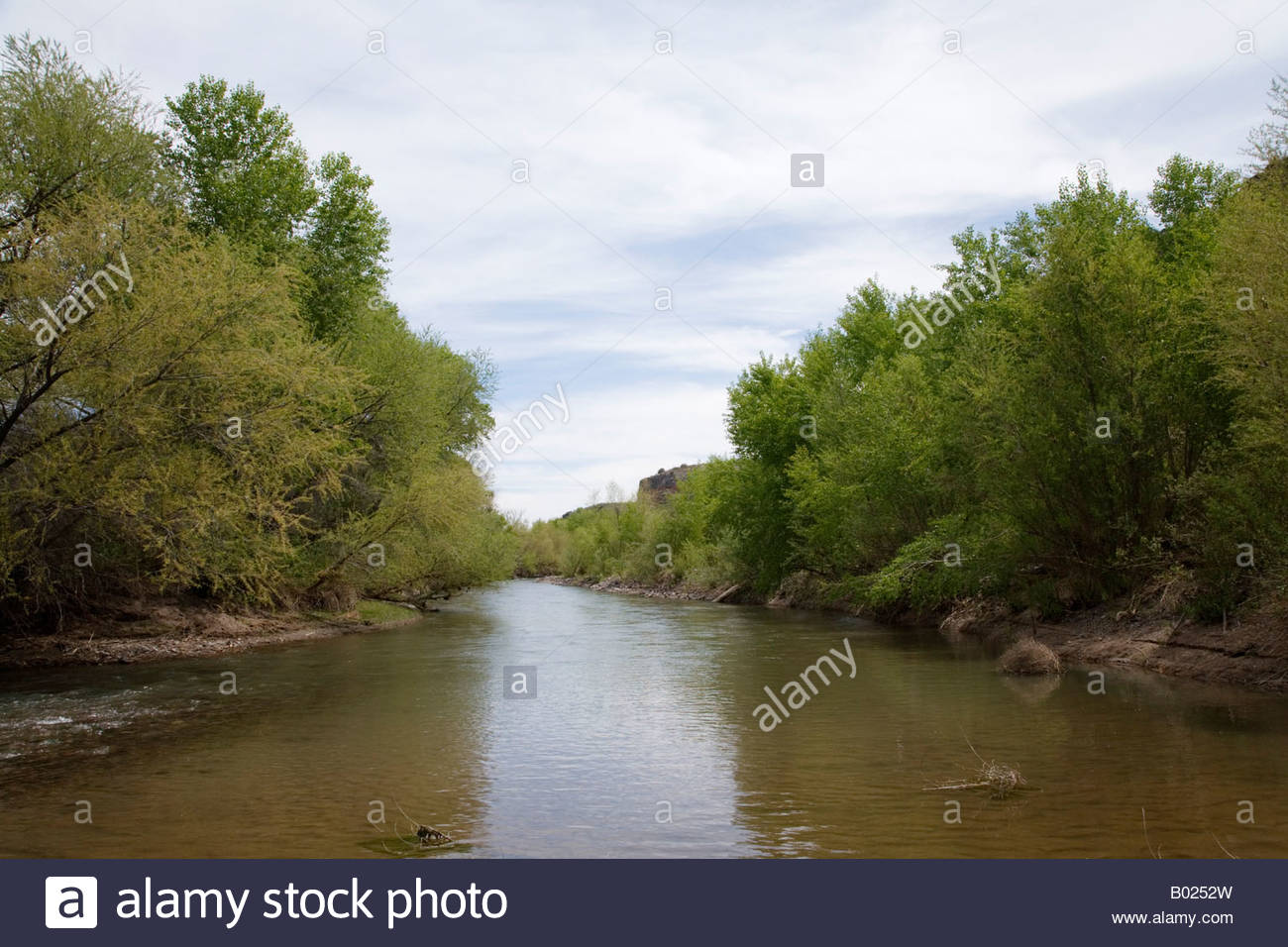 Gila River riparian area tree lined cottonwoods - Stock Image