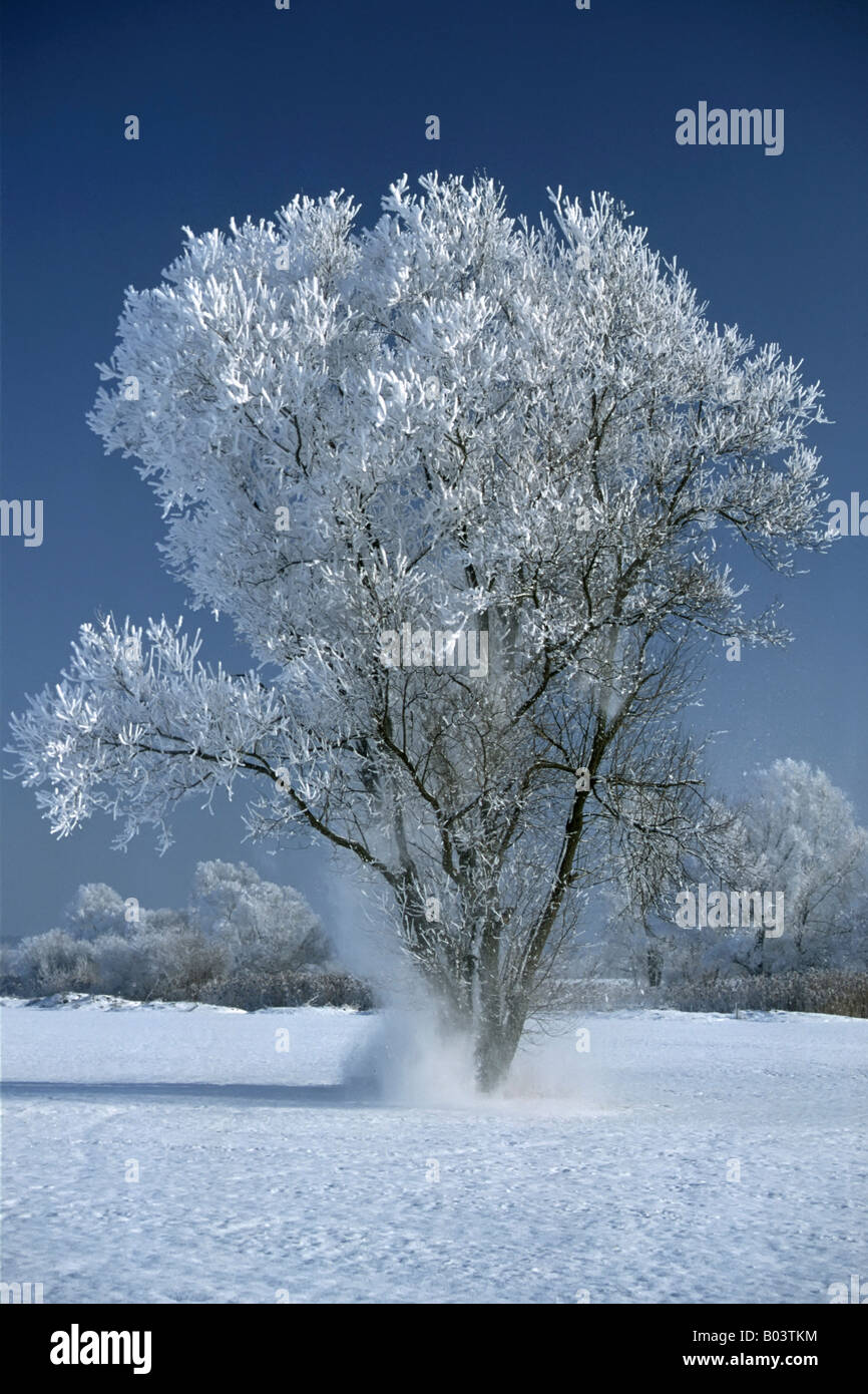 tree with hoar frost middle franconia bavaria bayern deutschland germany europa europe Stock Photo