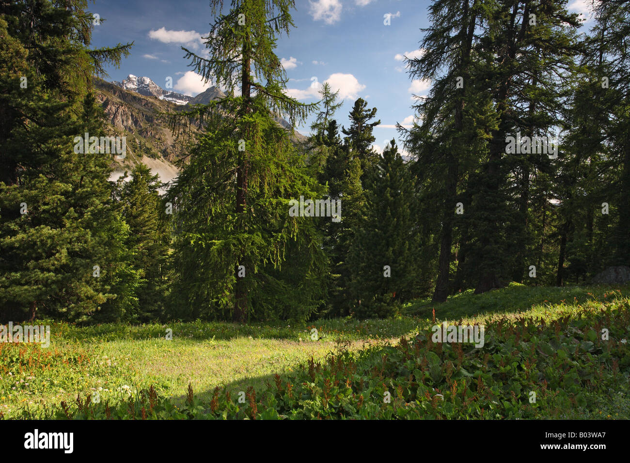 countryside landschaft landscape scenery alps allpen engadin graubuenden grisons canton switzerland schweiz europe - Stock Image