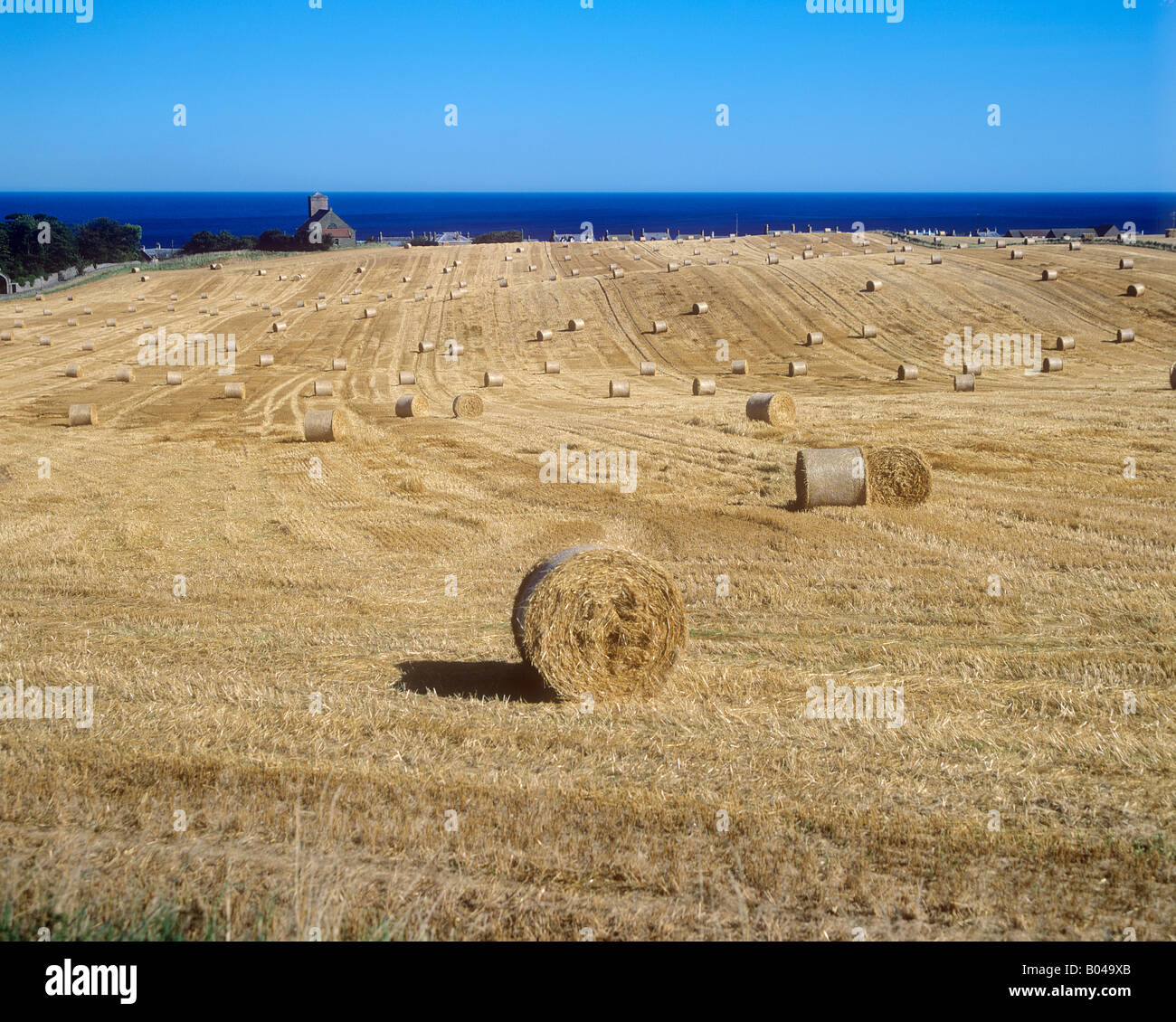 Field by the sea - Stock Image