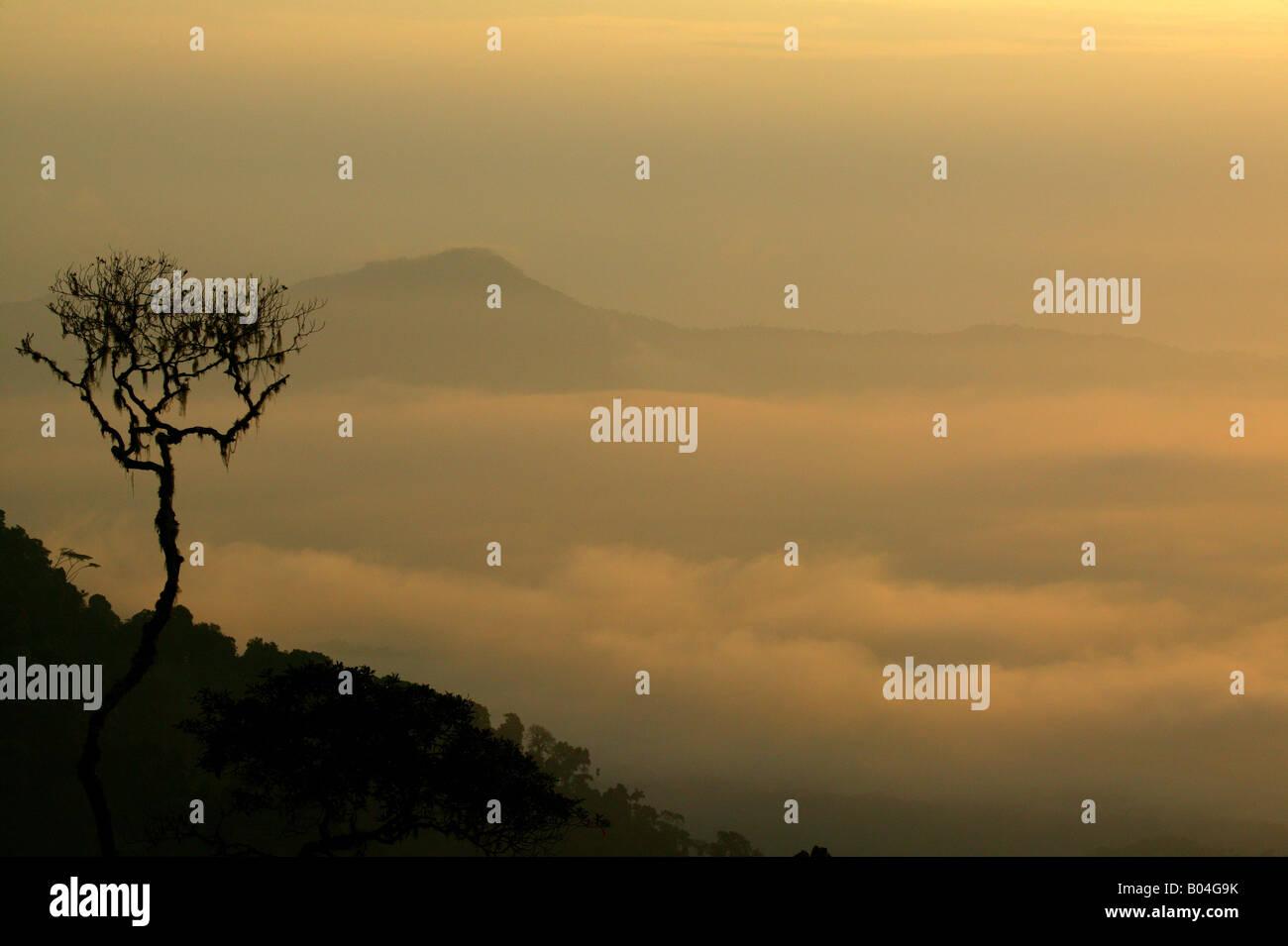 Misty rainforest at sunrise seen from Cerro Pirre in Darien national park, Darien province, Republic of Panama. Stock Photo