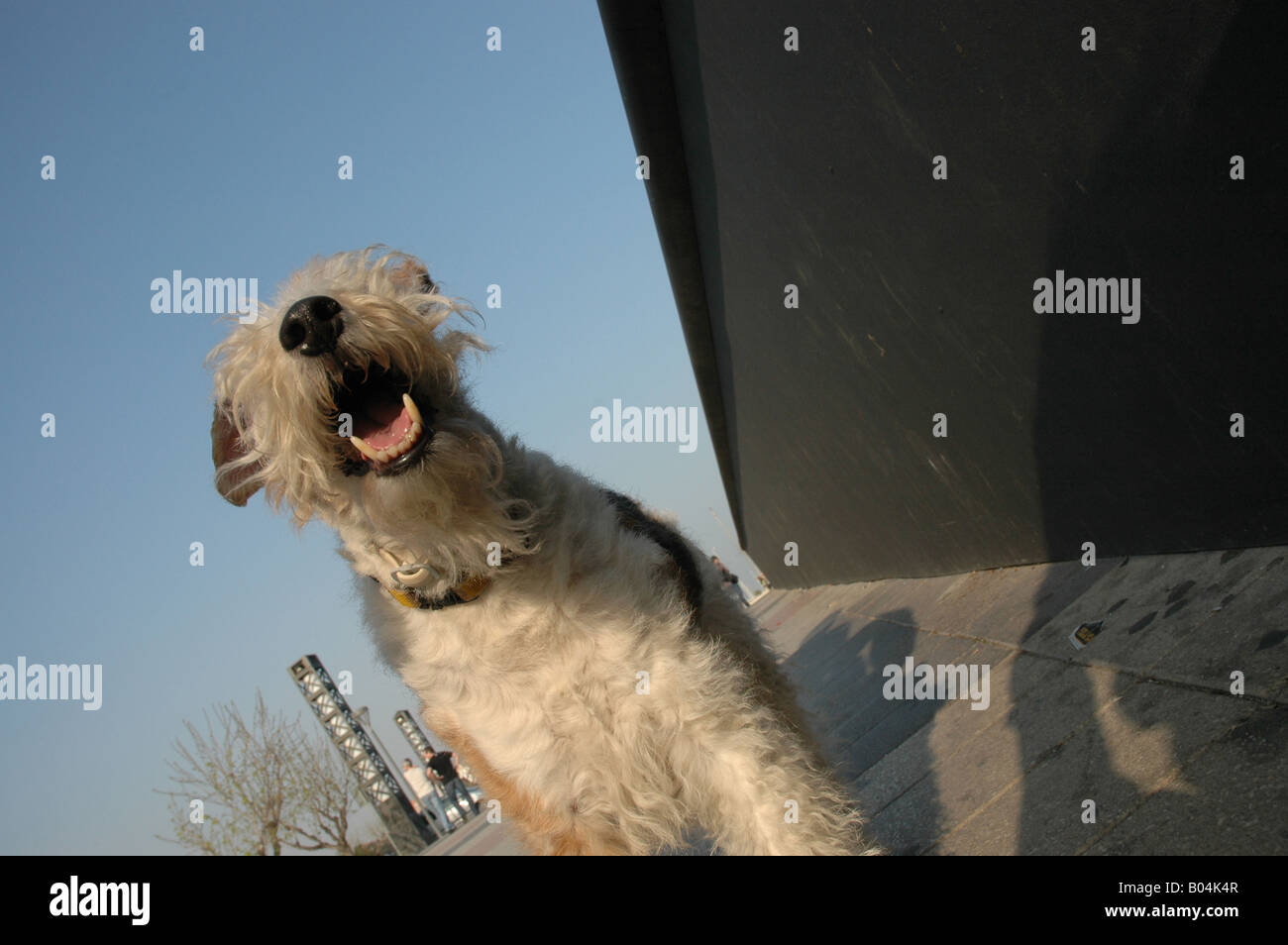 Strand beach sands strand Hund dog Tier animals Haustier pets - Stock Image