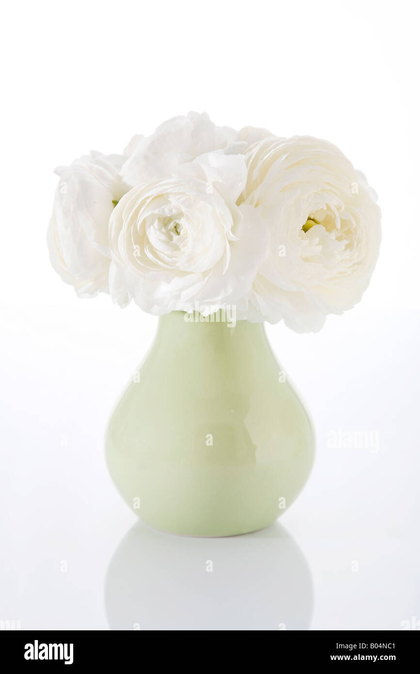 White Peonies in a vase - Stock Image