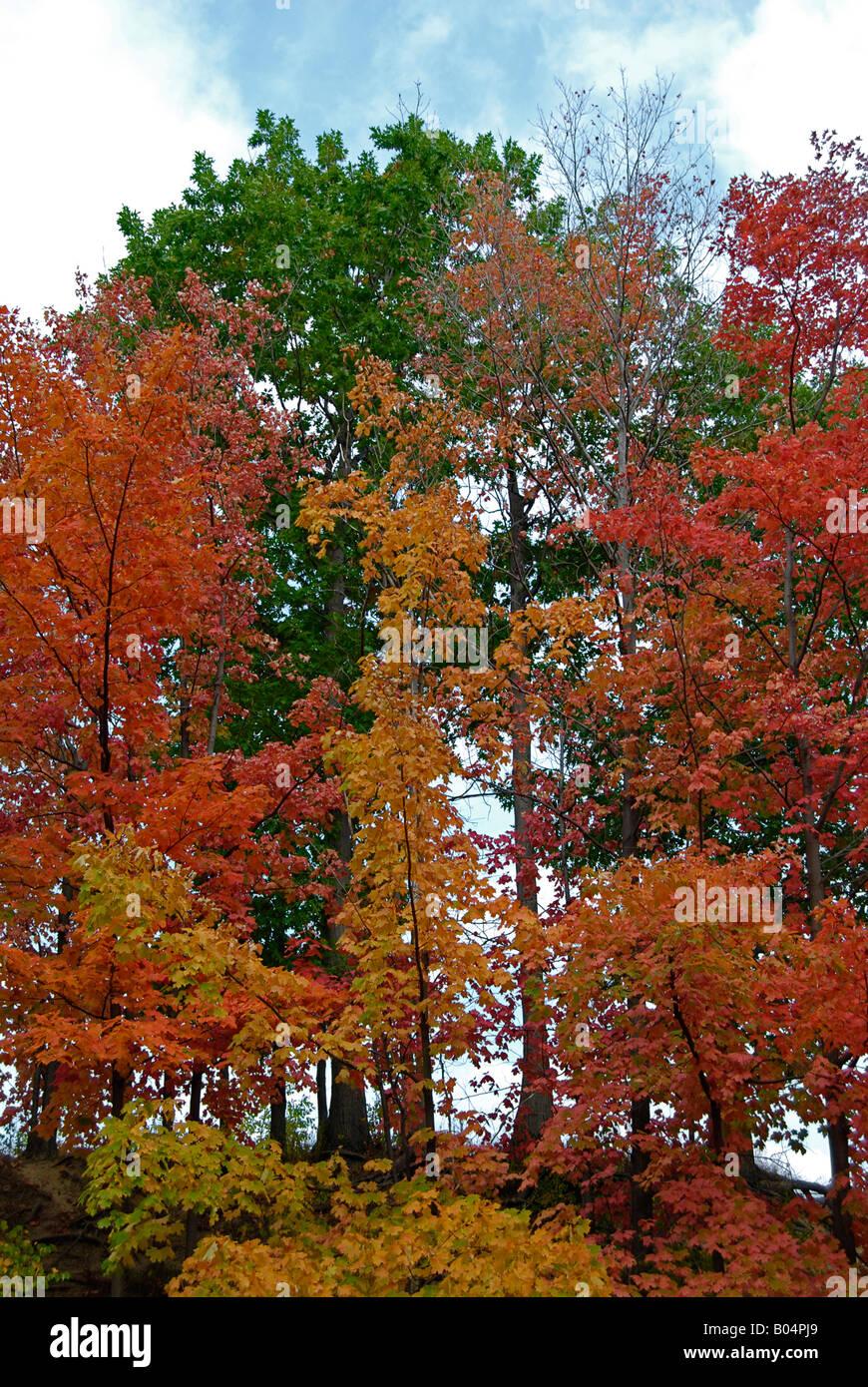 Trees in Autumn - Stock Image