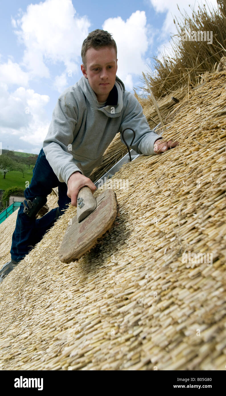 """Master Thatcher James Caro uses a """"Leggett"""" on thatching straw to repair the roof of Anne Hathaway's cottage in Stock Photo"""