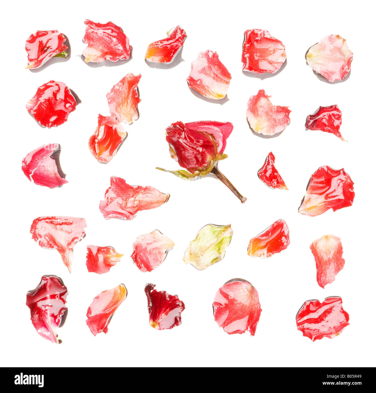 Full frame of rose petals - Stock Image