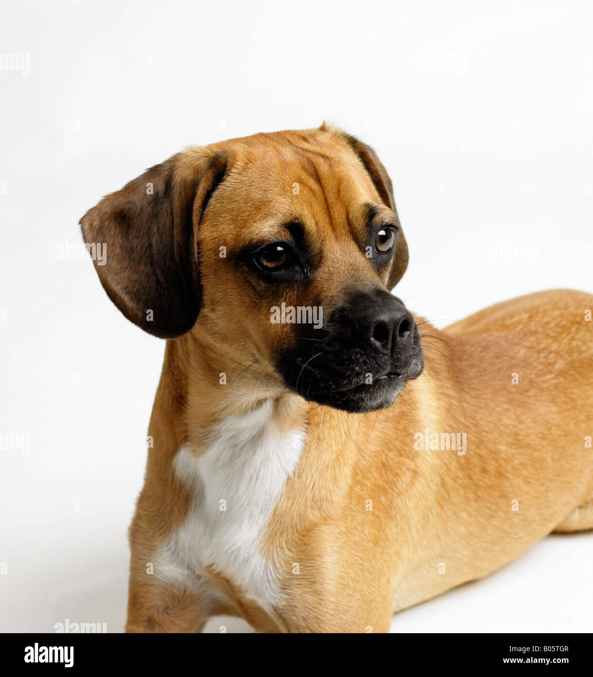 Potrait of a dog Stock Photo