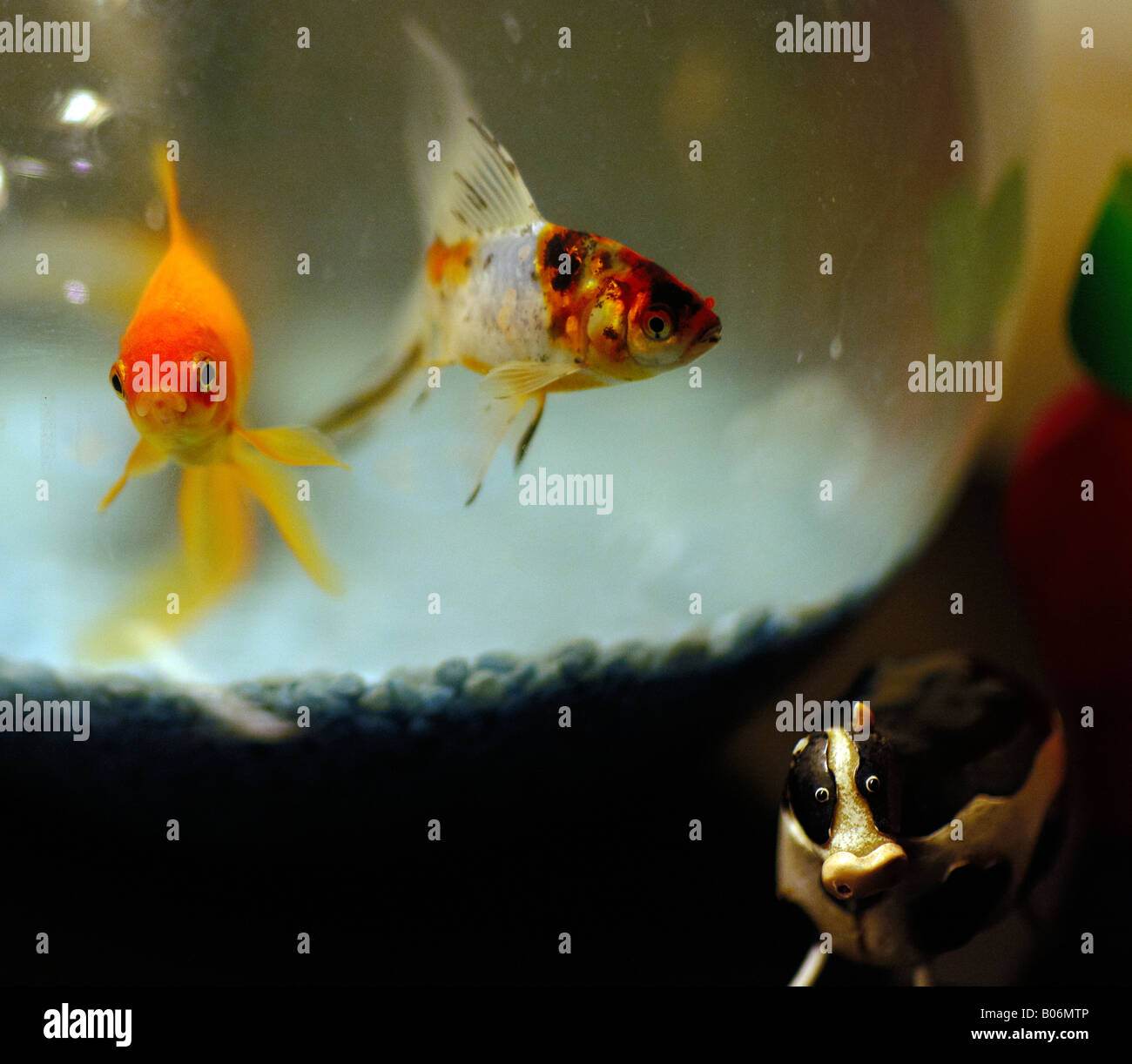 glass goldfish bowl