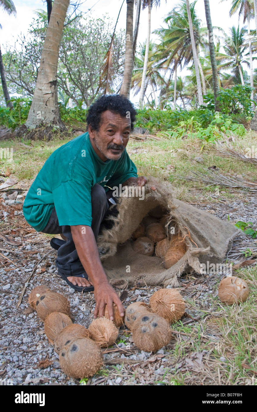 Collecting coconuts, Jaluit Atoll, Marshall Islands - Stock Image