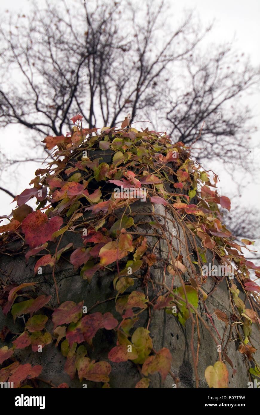 Fall Scene, Grosse Pointe, Detroit. - Stock Image