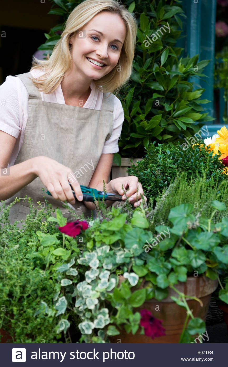 Woman florist or gardener tending to pot plants, pruning and shaping - Stock Image