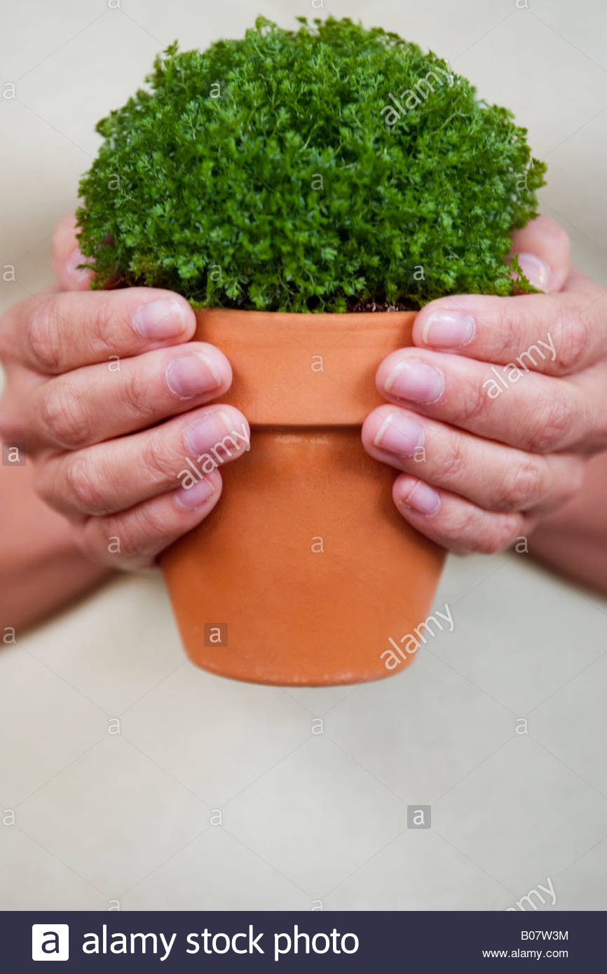 Woman holding the perfect little pot plant - Stock Image